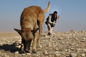 Perros detectores de minas