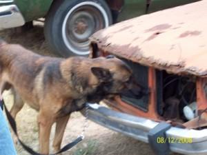 Perros detectores de exploisvos