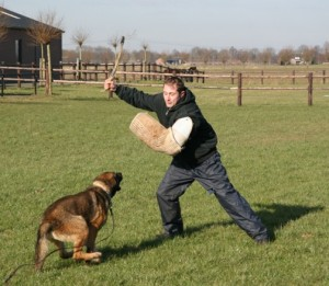Police dogs in action