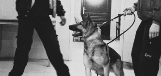 police-dog-handler-training