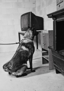 police dogs training methods