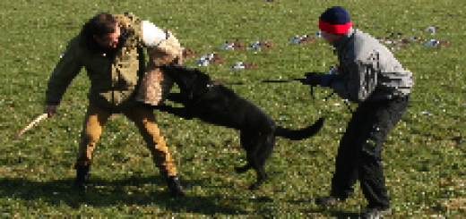 Patrol - police dogs training