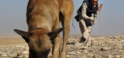 land-mines detection dogs