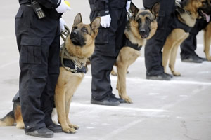 Police Dogs Centre team