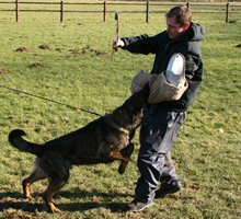 training-dogs-home